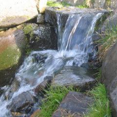 Wasseradern und Erdstrahlen